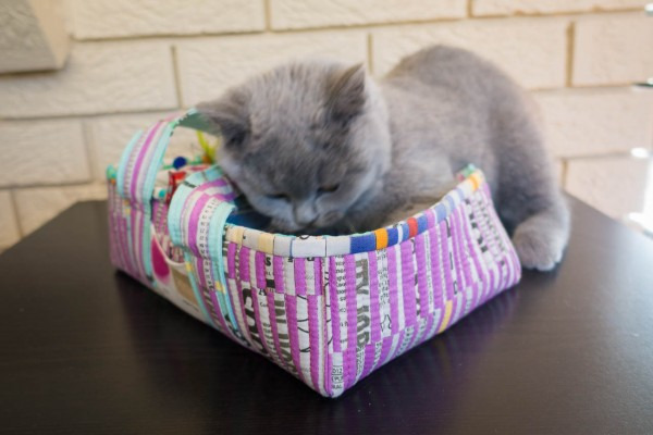 Social Tote - The perfect kitty basket with built in toys